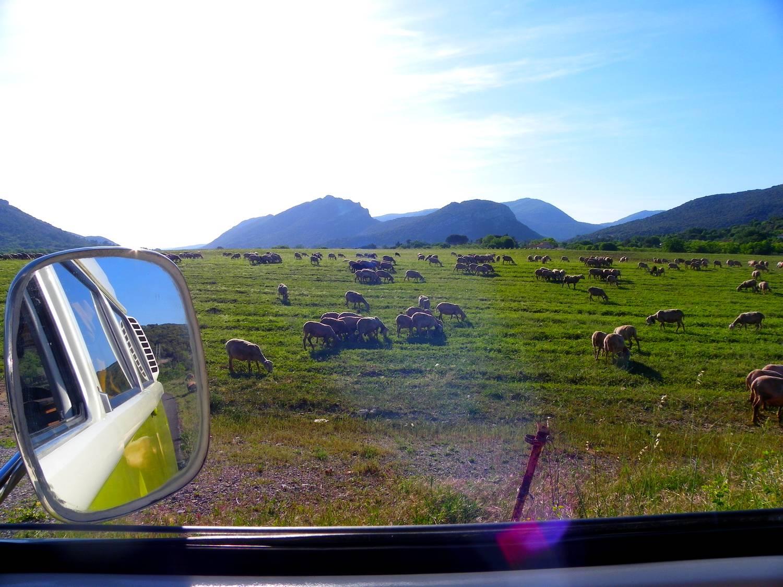 Sheeps between Anduze and Saint-Bauzille-de-Putois - France