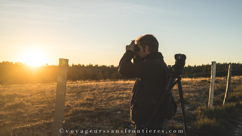 Observation des cerfs pendant la période de brame du cerf - Lozère, France